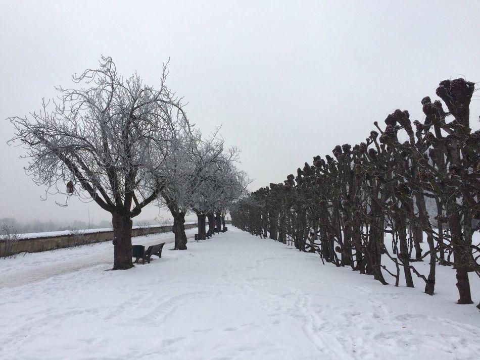 Winter Winter Wonderland Winter Landscape