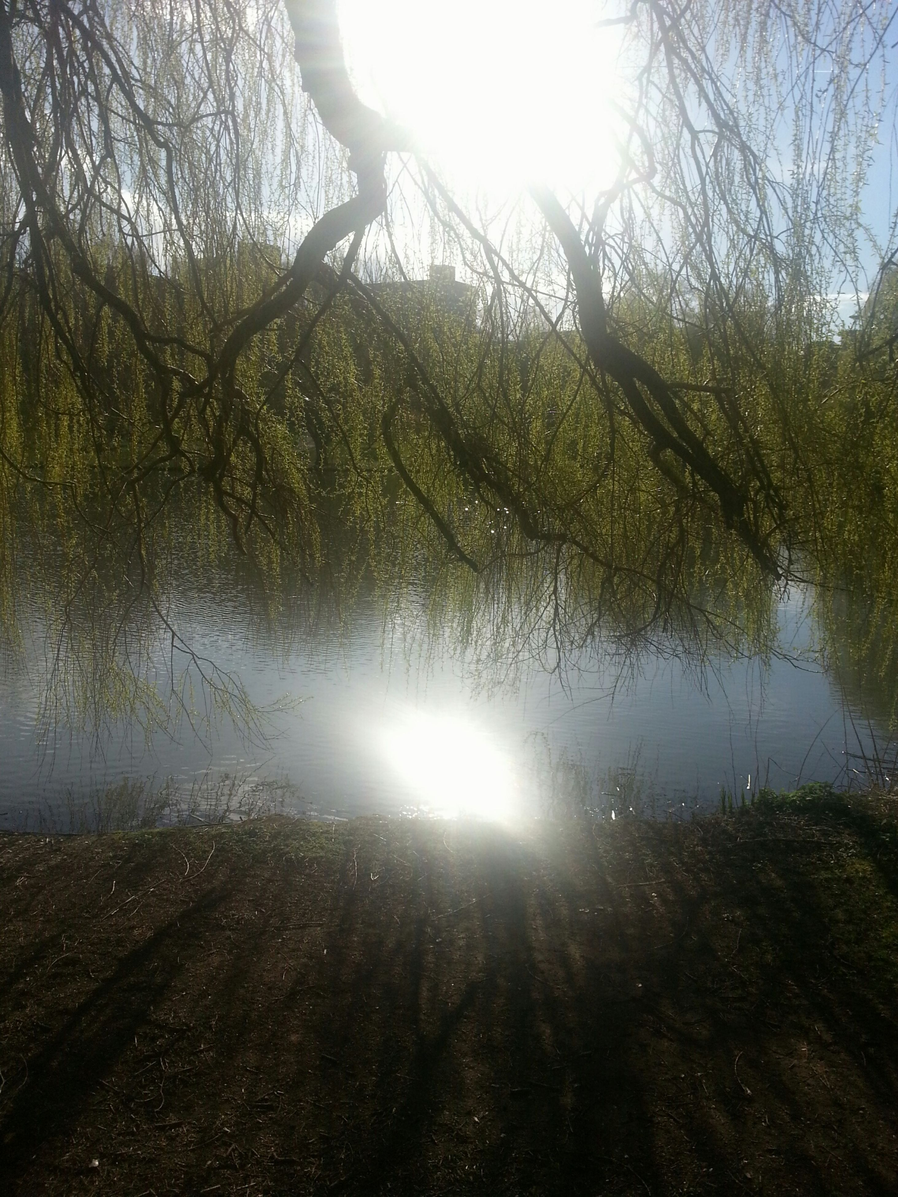 tree, water, reflection, sun, tranquility, tranquil scene, lake, sunlight, nature, beauty in nature, sunbeam, scenics, lens flare, sky, growth, branch, day, non-urban scene, forest, idyllic