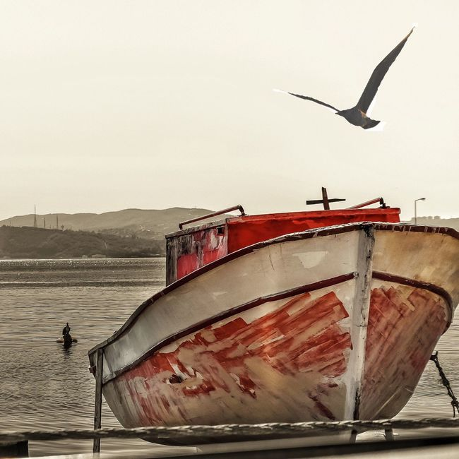 Özgür kuşlar yarım kalmış tekneleri sever.. Transportation Animal Themes Mode Of Transport Animals In The Wild Nautical Vessel Bird Boat Wildlife Water Seagull Travel Sea Flying Clear Sky Tourism Zoology Travel Destinations Tranquility Sky Outdoors