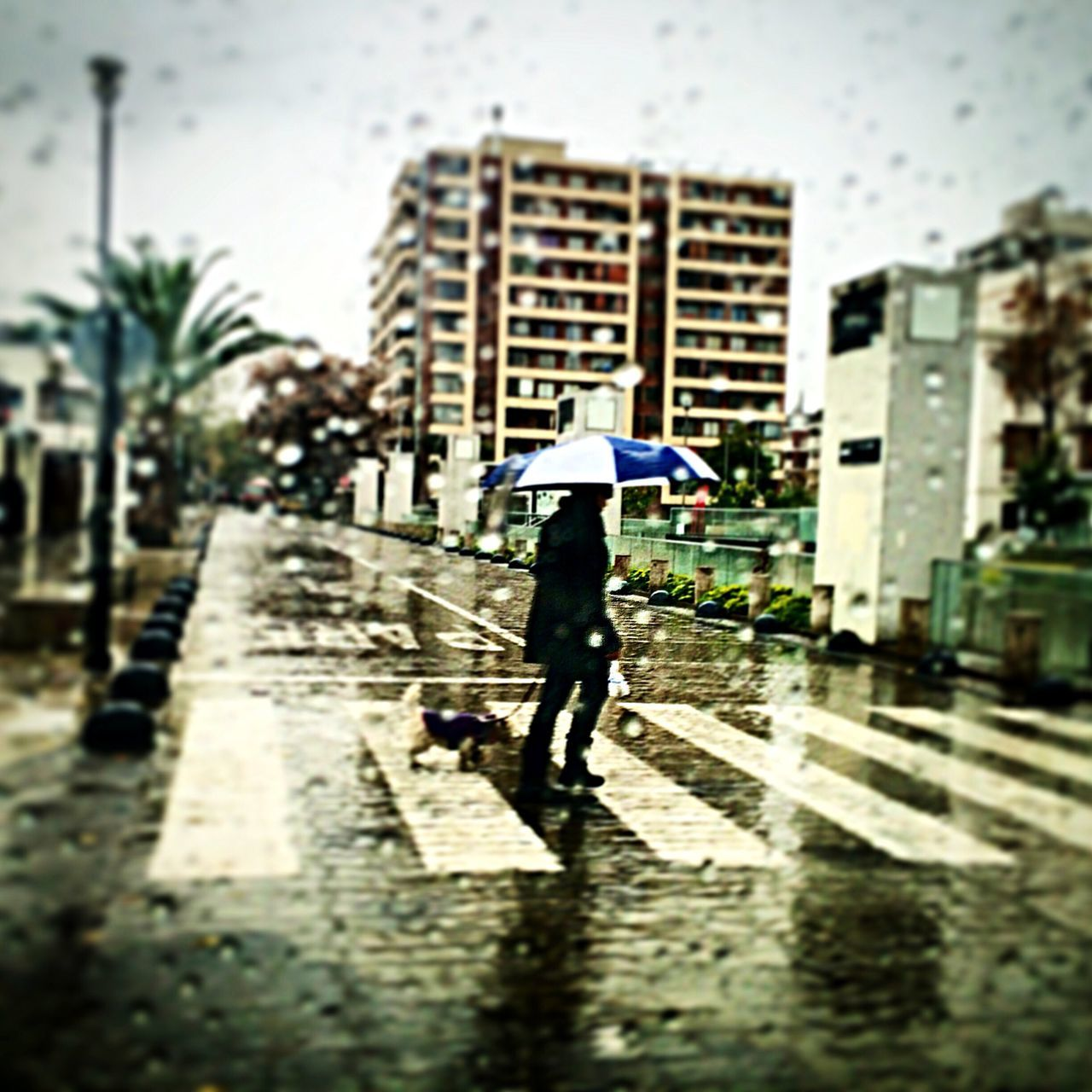 Person With Pet Puppy Crossing Road Seen Through Wet Glass On Rainy Day