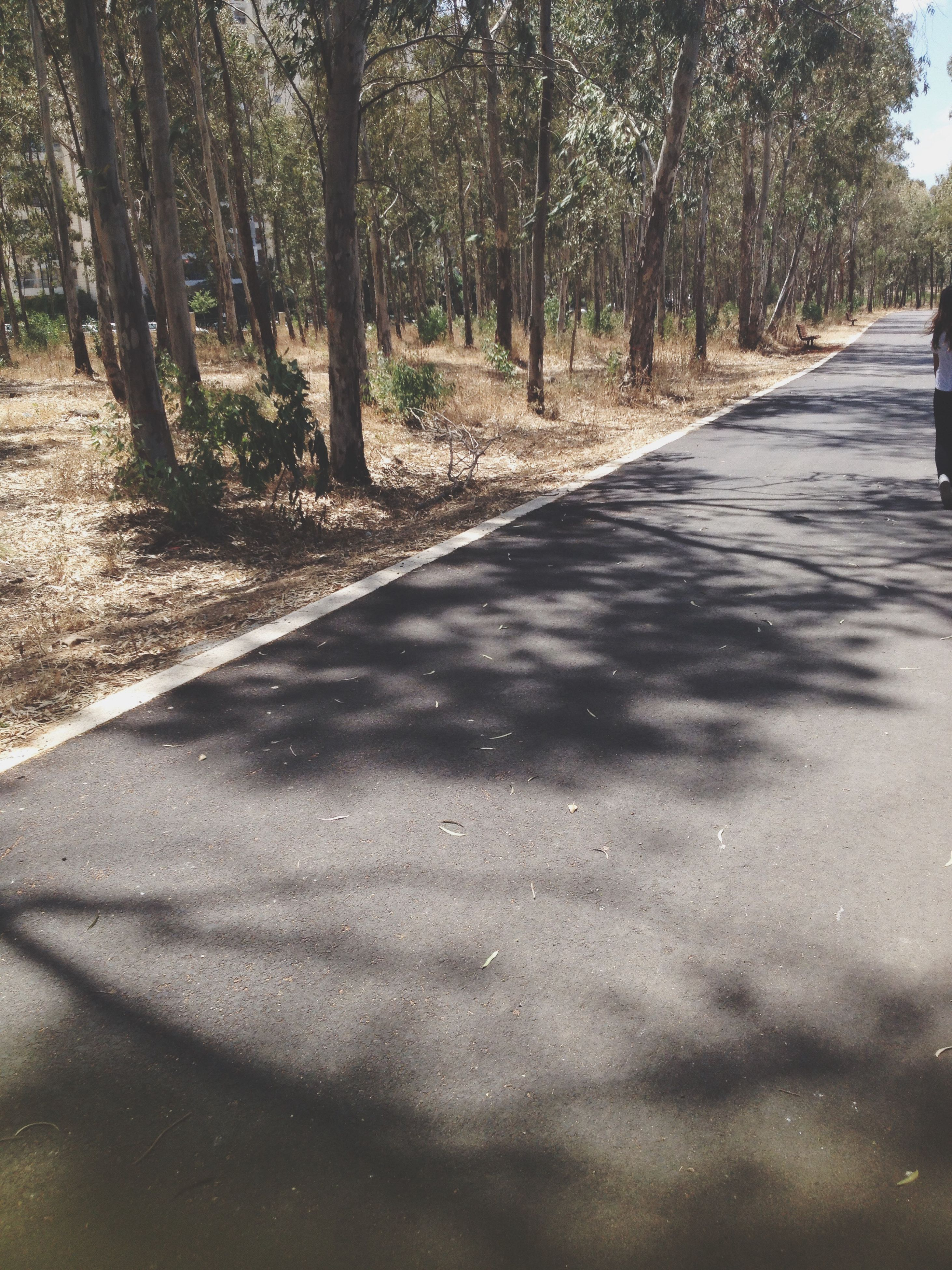 tree, the way forward, diminishing perspective, road, vanishing point, tranquility, treelined, shadow, transportation, tree trunk, sunlight, surface level, nature, tranquil scene, dirt road, growth, street, footpath, day, outdoors