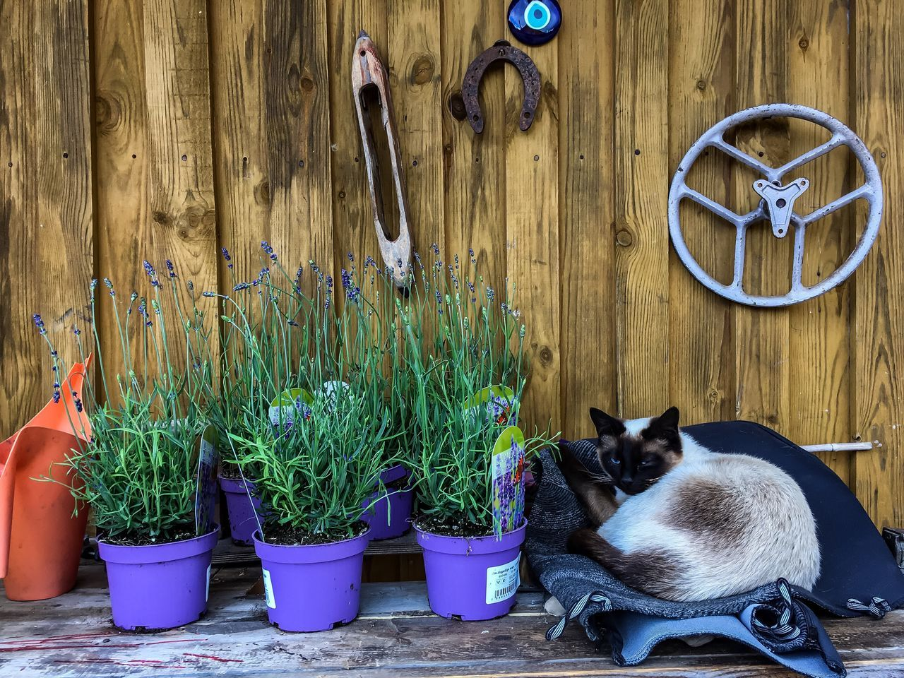 pets, domestic animals, plant, potted plant, animal themes, domestic cat, mammal, no people, one animal, growth, indoors, day