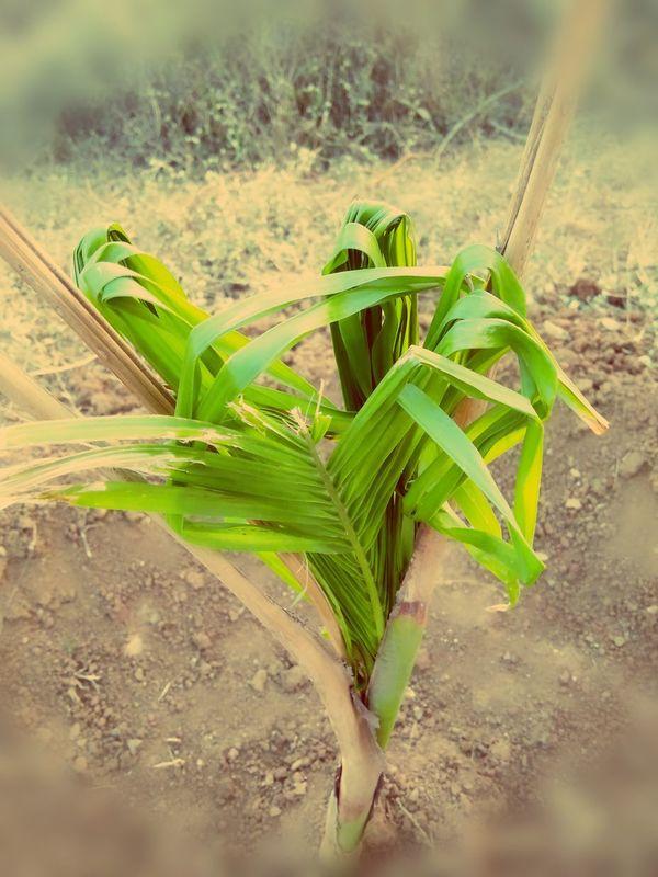 Nature Leaf Freshness No People Close-up EyeEm Nature Lover