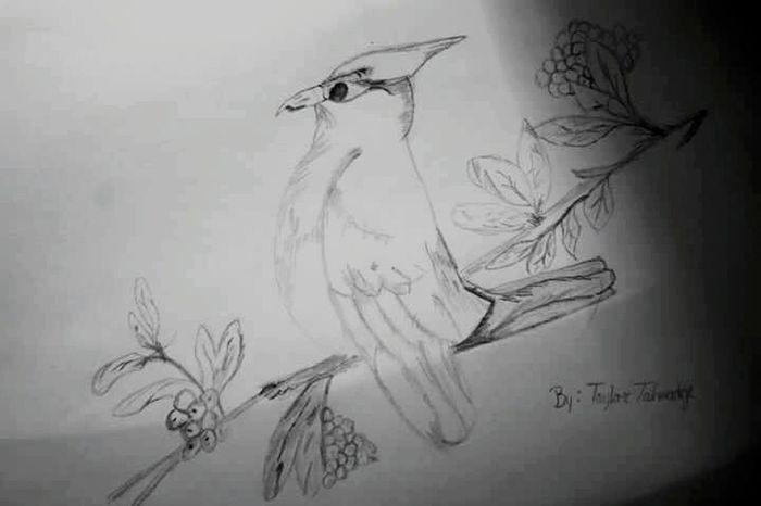 Drawings Drawing Art ArtWork Birds Blackandwhite Blackandwhite Photography