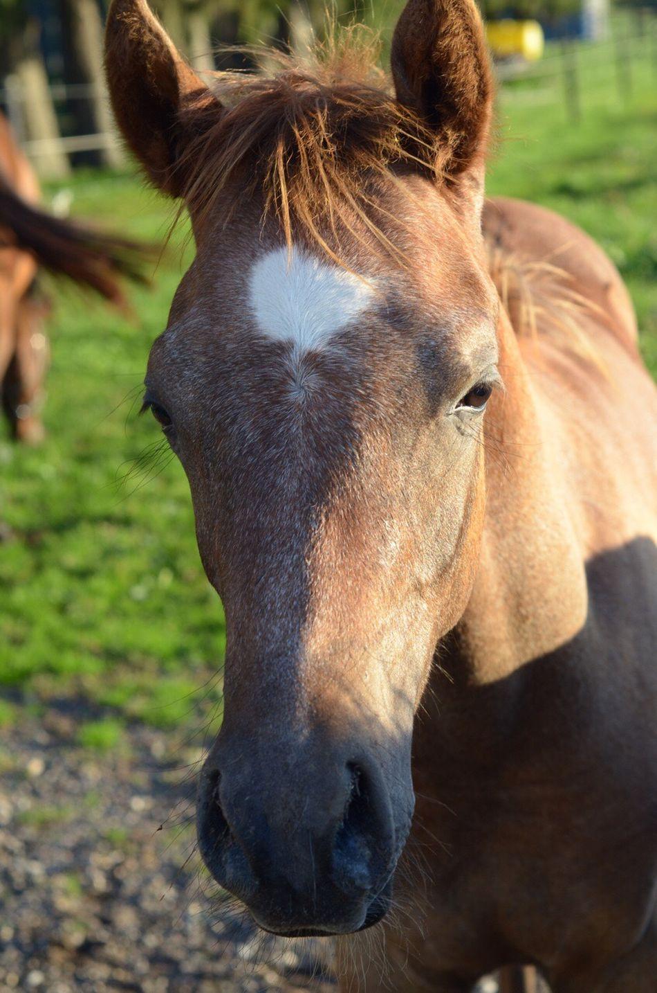 Colt Arabian Arabian Horse Baby Horse Horse Animal Head  Michigan Arabians Hickory Corners, MI