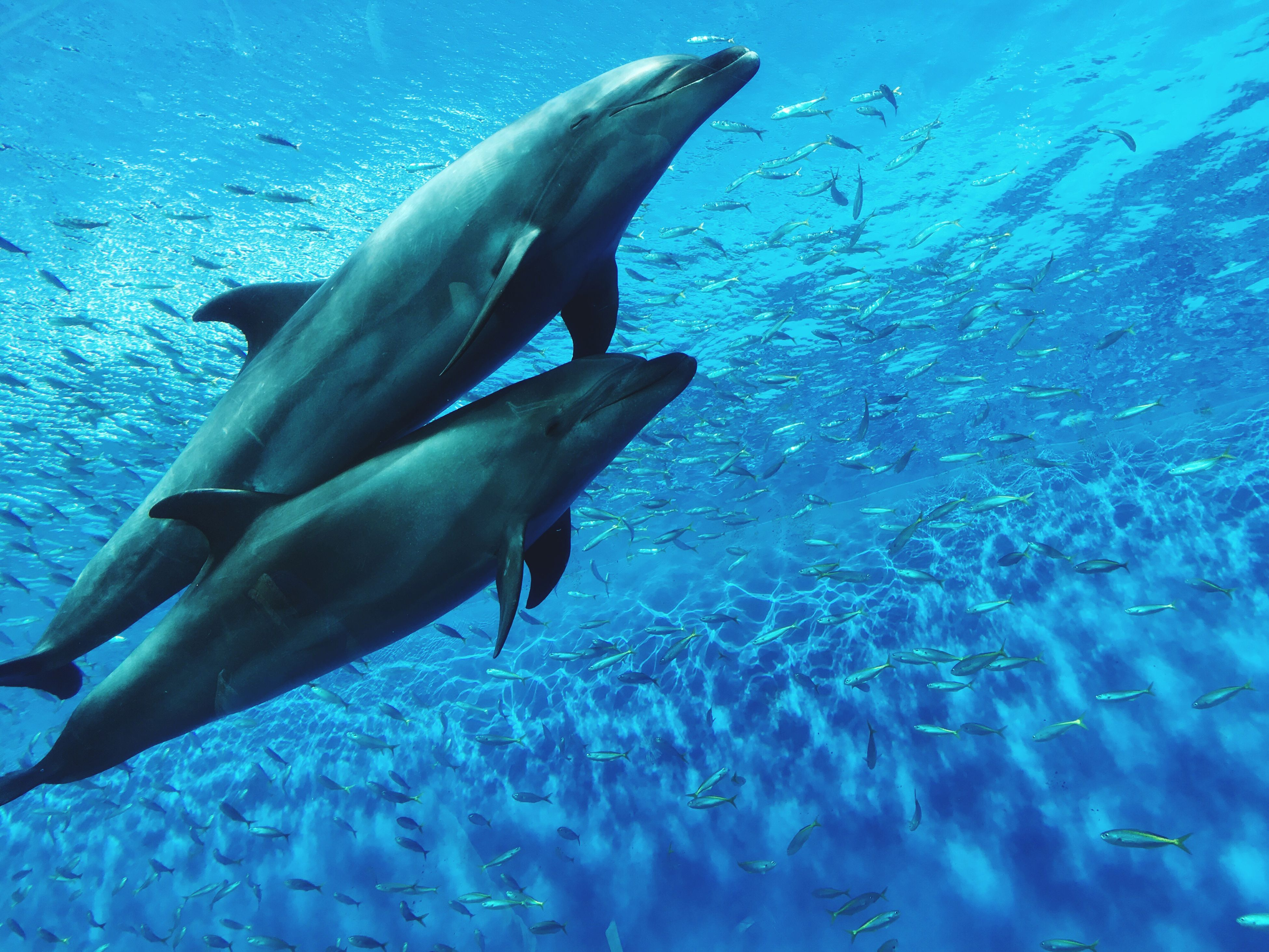 animal themes, water, animals in the wild, sea life, swimming, fish, no people, sea, underwater, animal wildlife, dolphin, blue, nature, aquarium, day, large group of animals, mammal, aquatic mammal, undersea, indoors
