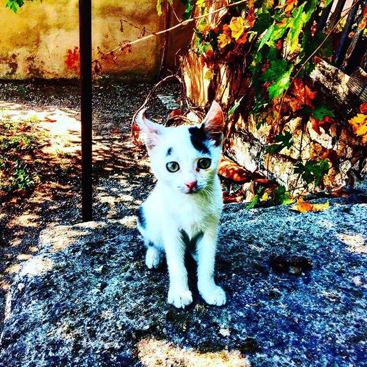 Yavrumun yavrusu Kitten Cat Kedi Pisi Mışık