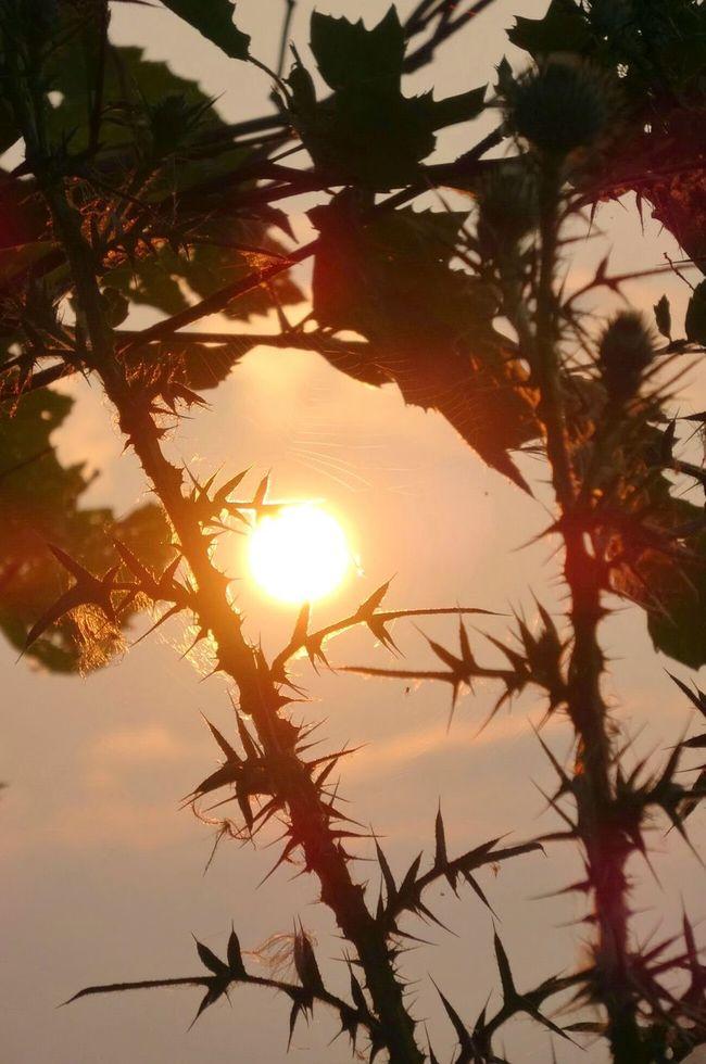 I wish you all a bright weekend my friends... St Clair Metro Park EyeEm Best Shots - Nature EyeEm Nature Lover EyeEm Best Shots Colorful Showcase: January Eyemmasterclass Sunrise Silhouette Sunrise_Collection