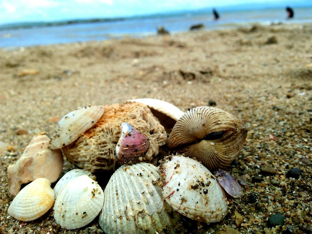 EyeEm Selects Shell Seaside Beach Focus Sand