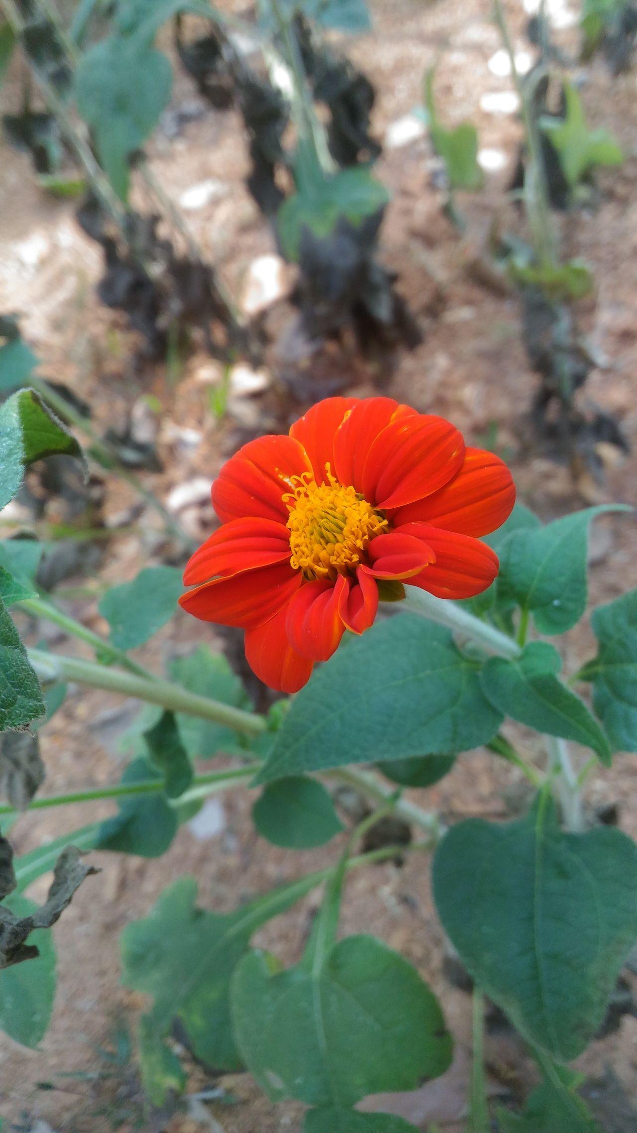 Nature Flower Meppayur Enjoying Life