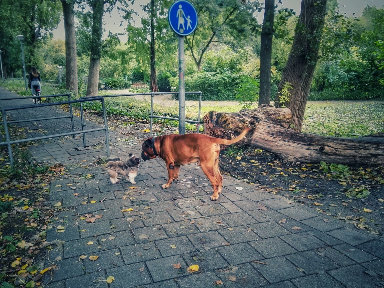 Dog Nature Pets Domestic Animals Mammal Tree Outdoors Dogs Big Dog Small Dog Contrast Big Small Fall Colors After The Rain Autumn Amsterdam Tree