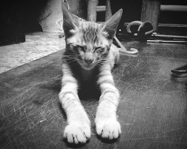 Ilovecats I Love Cats Cats Cute Kitten Orange To Black Blackandwhite Eyem Cute Cats Pet Lover I Love My Cats