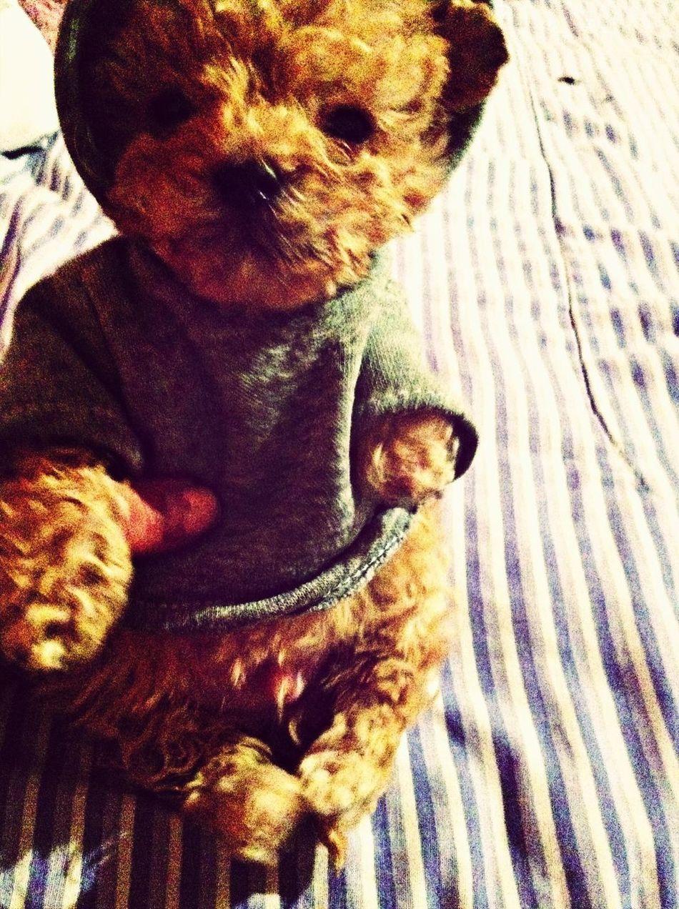 my new puppy