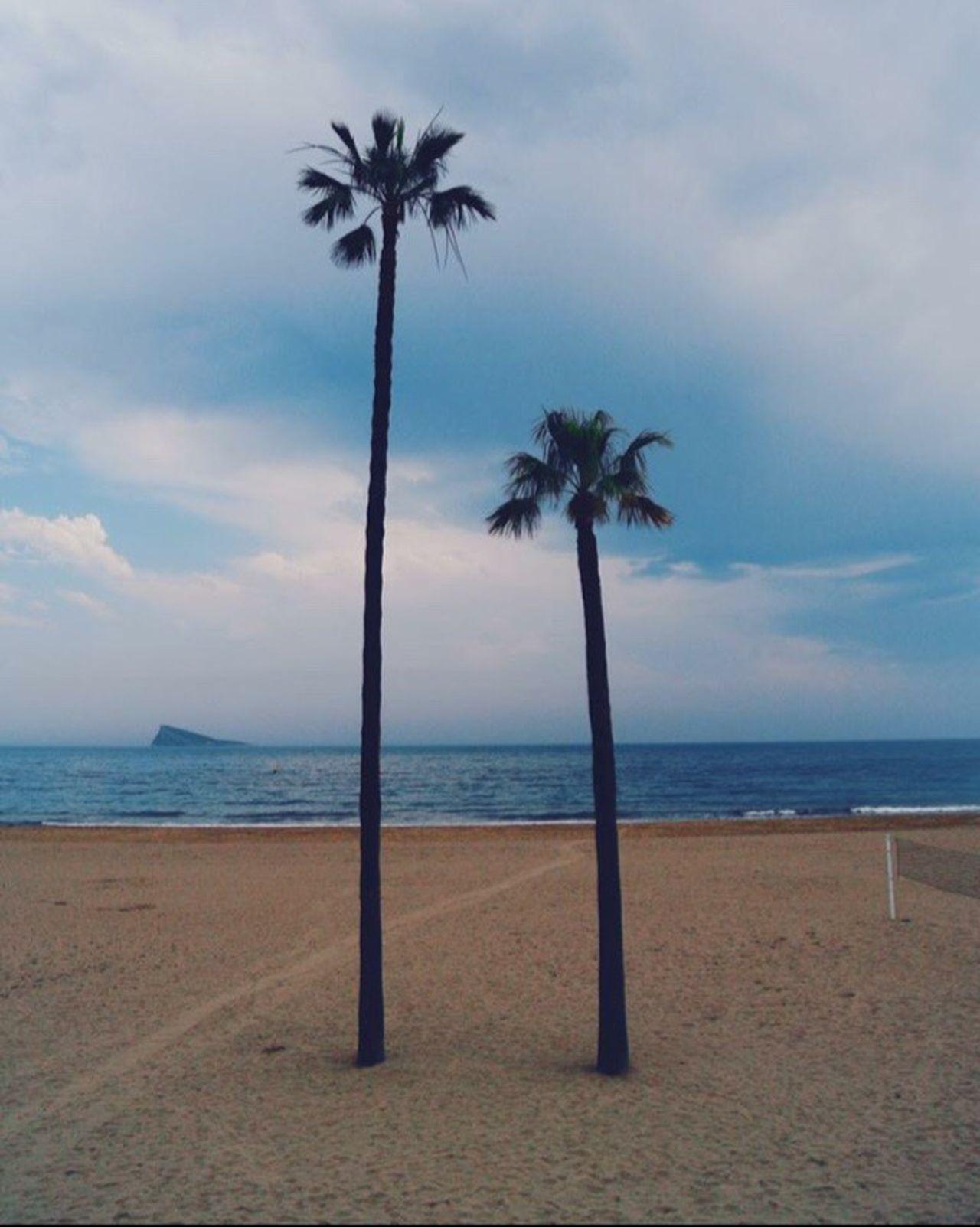 Beach Sea Palm Tree Sky Horizon Over Water Sand Water Nature Beauty In Nature