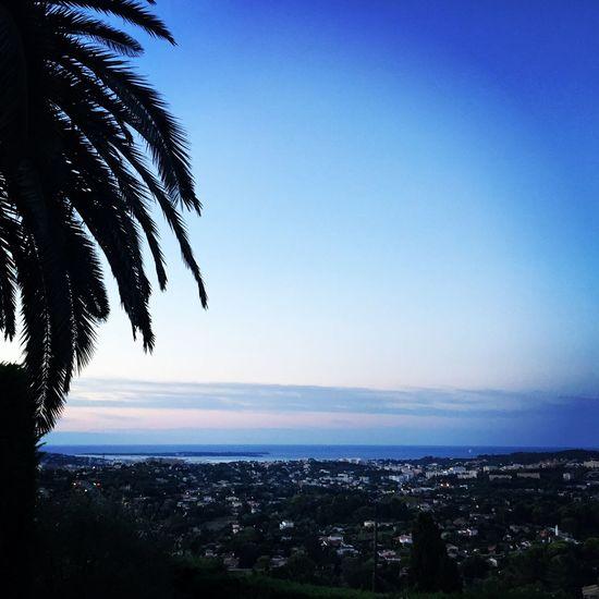 Take me back France Pretty View Palm Tree Cannes Mougins Blue Sky Sea Summer Nature