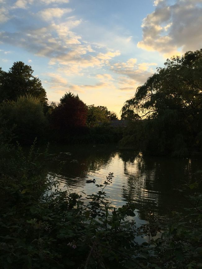 Nature Lake Duck Pond Sunset Shilouette Evening Papworth Everard