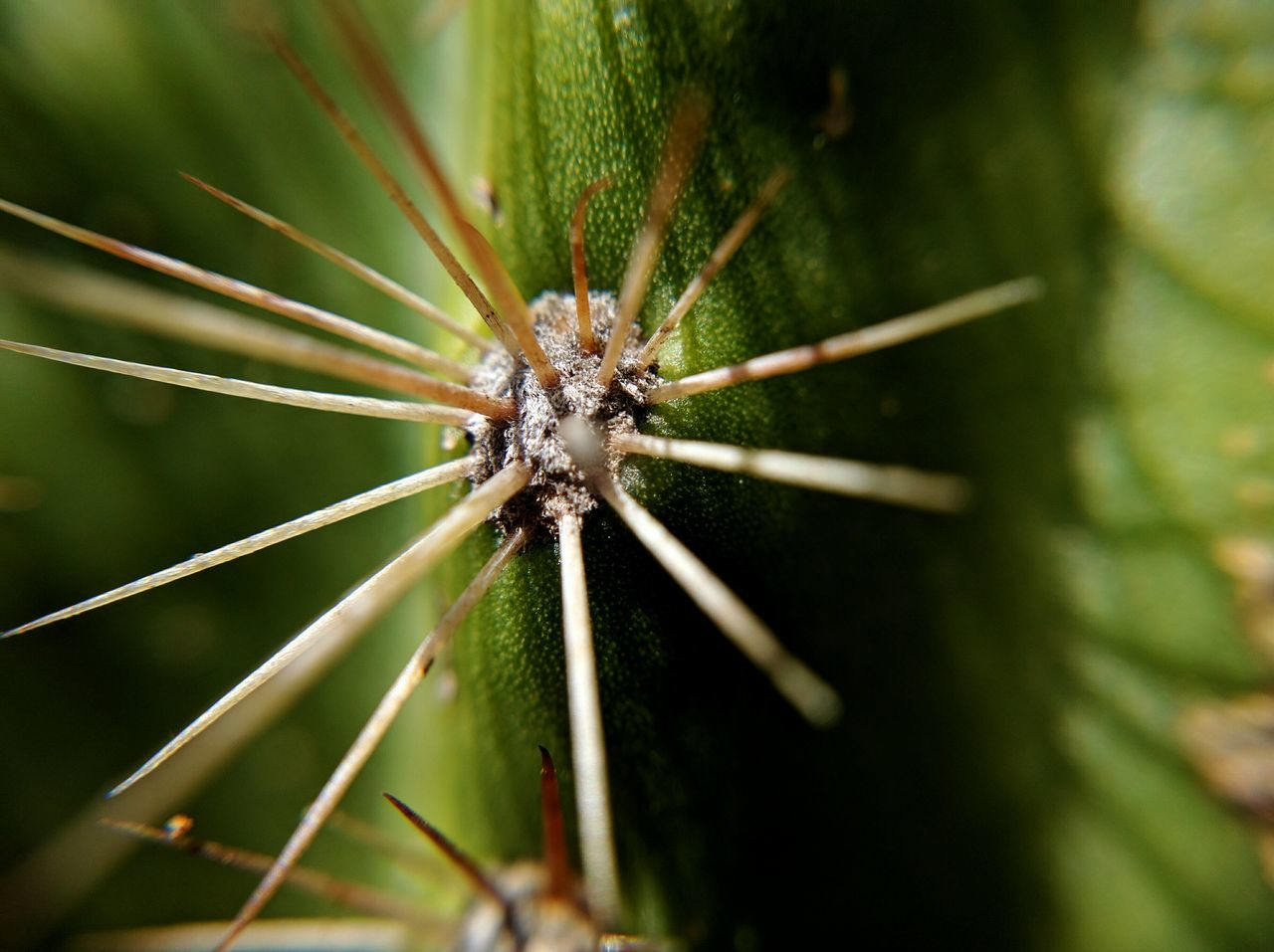 Close-up Green Color No People Cactus Cactus Spines Succulent Plant Pricks