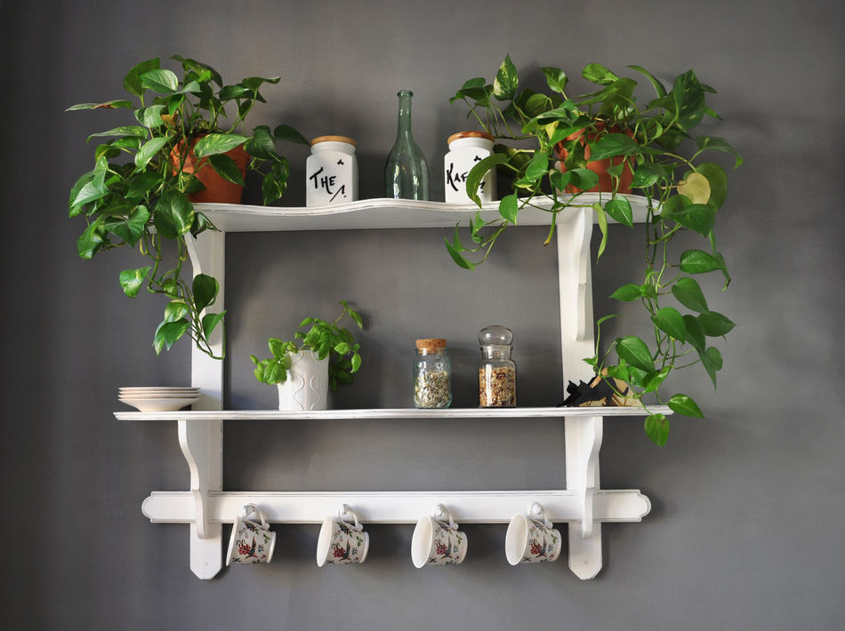 Shabby chic kitchen shelf with herbs and flowers. Arrangement Coffee Cups Day Flower Gray Green Green Color Growth Herbs Interior Interior Design Kitchen Kitchen Shelf No People Old Fashioned Plant Pots Potted Plant Shabby Chic Shelf Tea Vintage Wall White EyeEm X Lexus - Your Design Story
