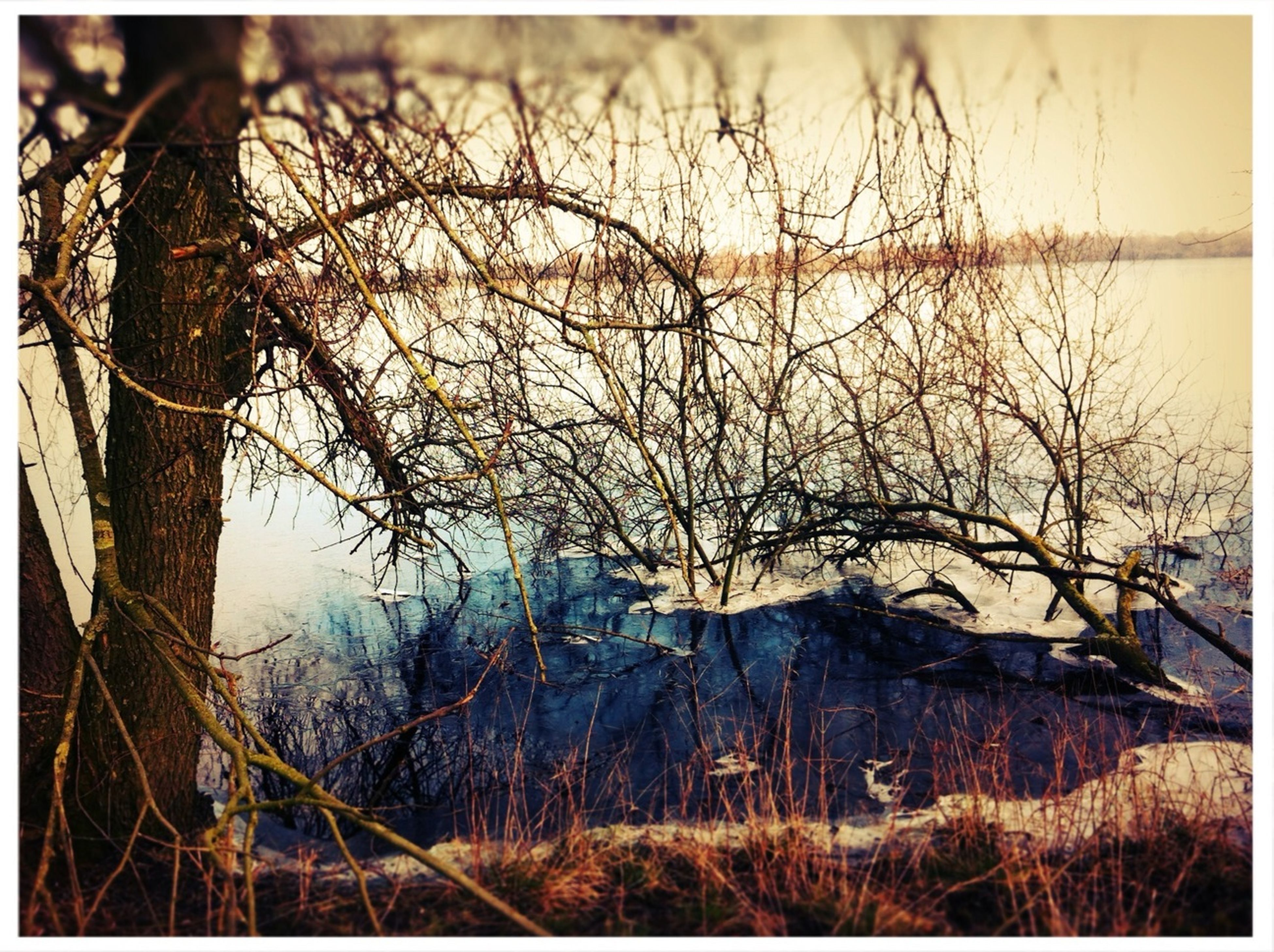 bare tree, transfer print, branch, water, tranquility, auto post production filter, tranquil scene, sky, tree, nature, scenics, beauty in nature, lake, landscape, no people, outdoors, lakeshore, non-urban scene, plant, day