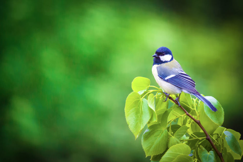 Beautiful stock photos of frühling, Animal Themes, Animal Wildlife, Animals In The Wild, Avian