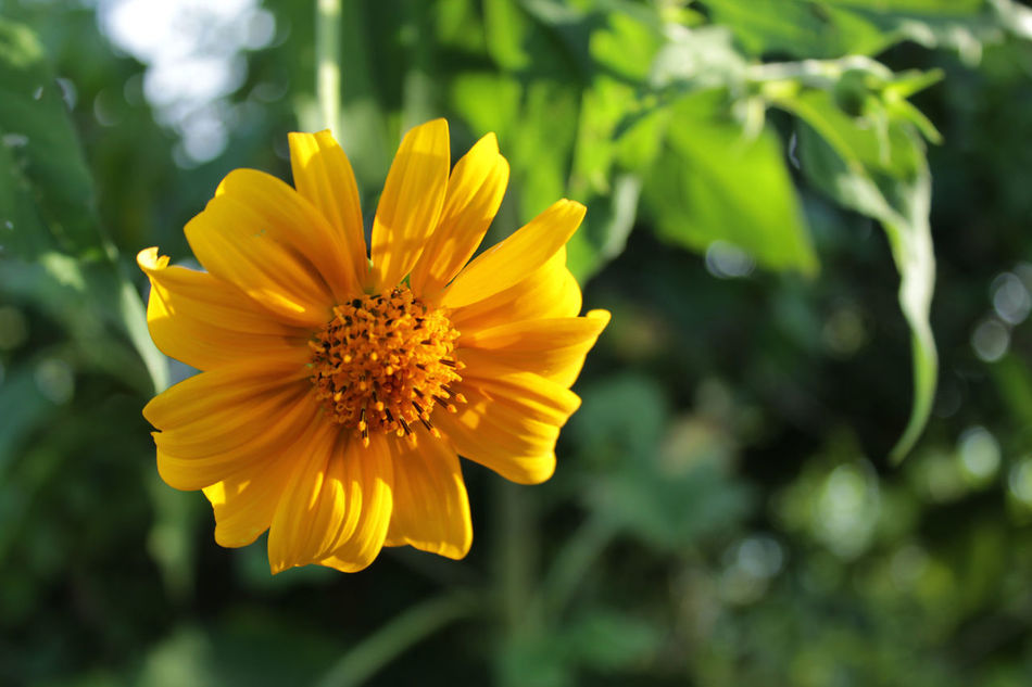 Like a flower Flower Yellow Nature Petal Plant Close-up No People Outdoors Fotografomexicano Canonphotography Photography Mestradaphotography Canon Yucatan Mexico