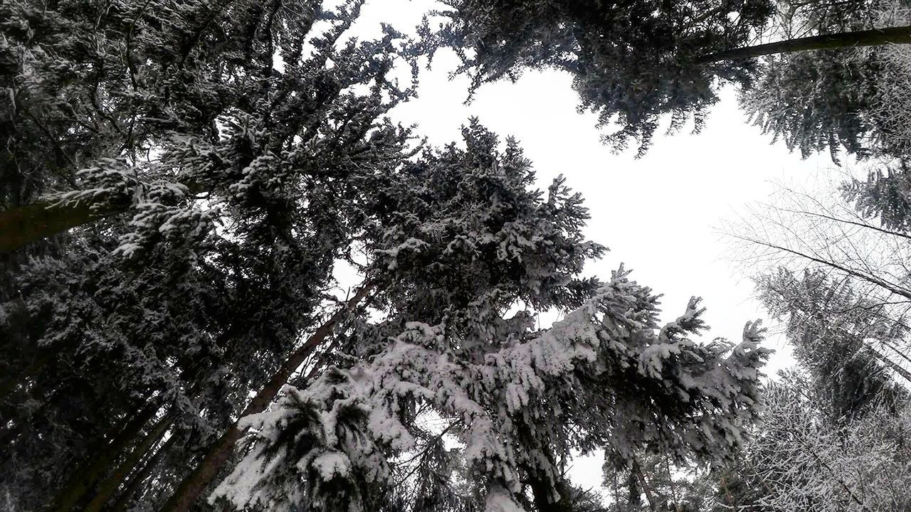 Tree Low Angle View Growth Nature Beauty In Nature No People Outdoors Branch Sky Day Forest Snow Winter Nature Photography Landscape_Collection EyeEmNewHere Landscape Nature Tree