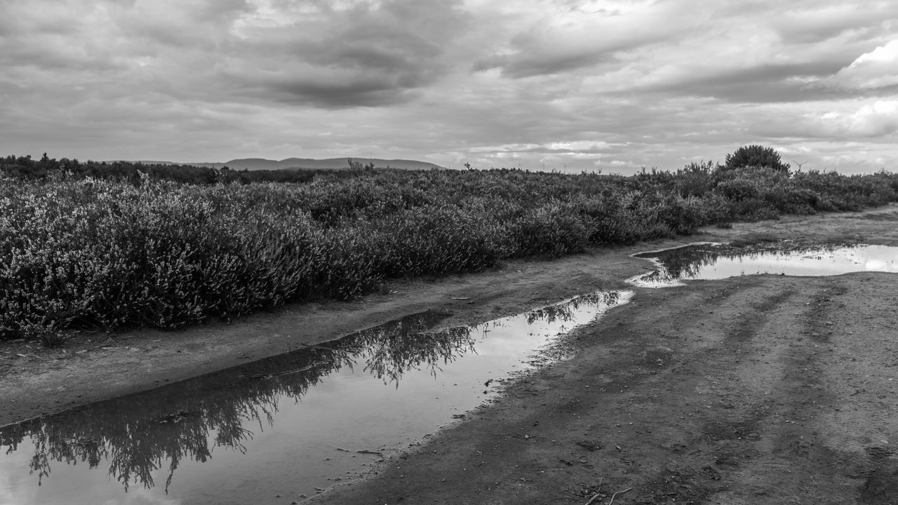Donnersberg Mehlinger Heide TheWeekOnEyeEM B&w Beauty In Nature Blackandwhite Bw Cloud - Sky Clouds Day Landscape Nature No People Outdoors Puddle Reflections Scenics Sky Tranquil Scene Tranquility Water