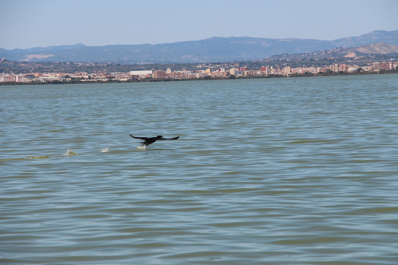 water, animals in the wild, waterfront, flying, nature, animal themes, bird, no people, outdoors, one animal, day, sea, beauty in nature, sky