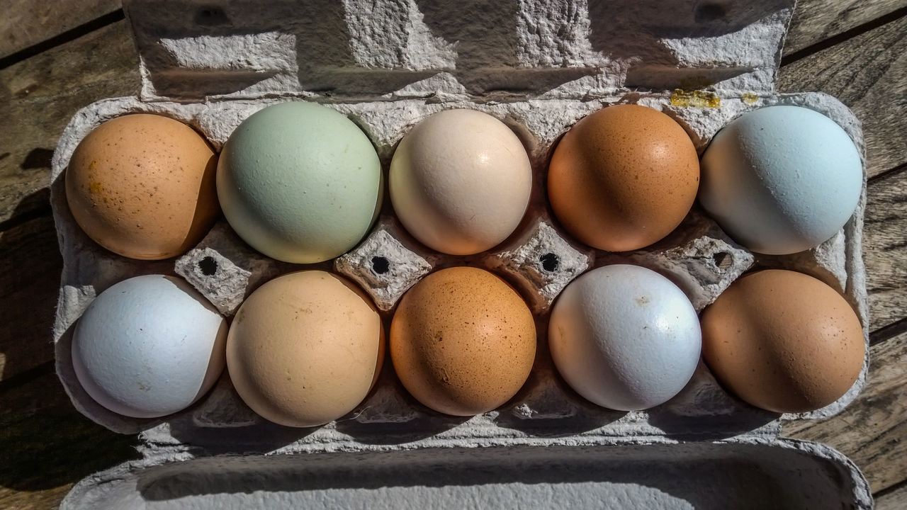 Bio Brown Close-up Colored Eggs Day Diversity Diversity In Nature Easter Eggs Egg Egg Carton Eggshell Farming Food Food And Drink Fragility Freshness Healthy Eating Natural Colors No People Outdoors Wood - Material