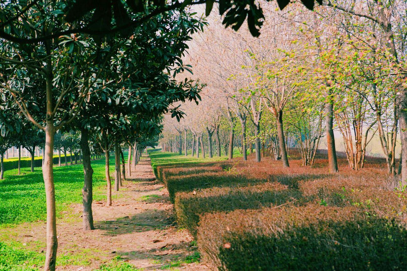 My City Botanical Gardens Spring Has Arrived Streetart Art Park Streetphoto_color VSCO