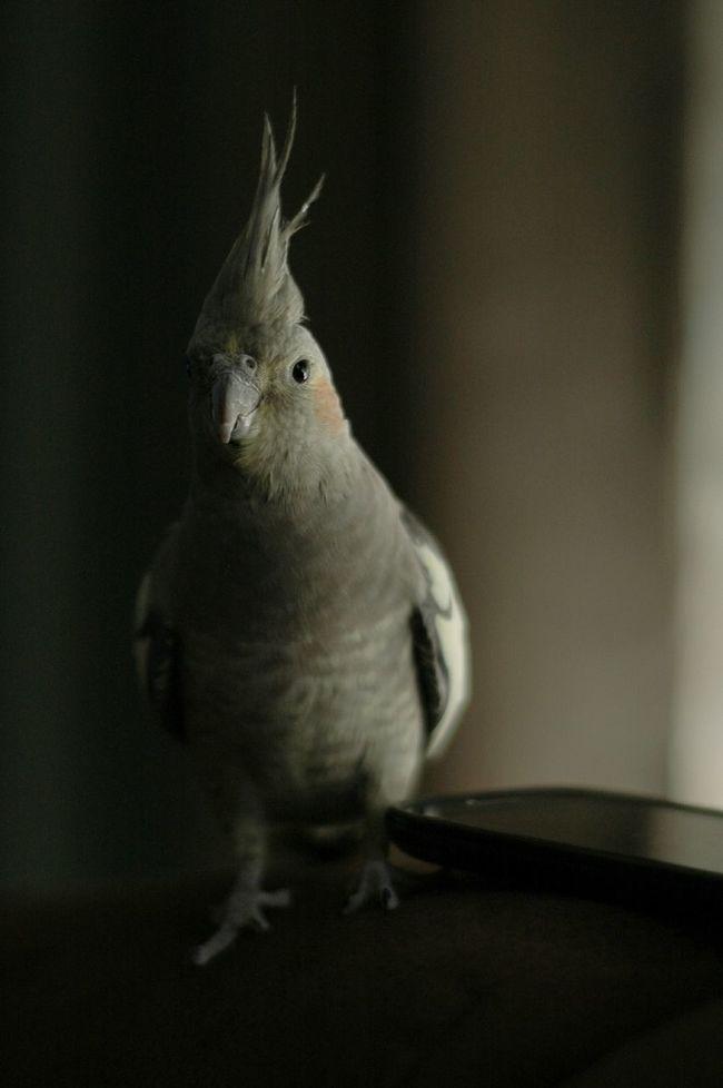 Mi Pollo Y Yo EyeEm Best Shots The Purist (no Edit, No Filter) Birds