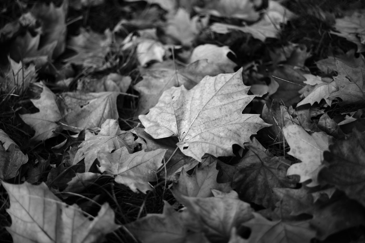 Leaf Blackandwhite Nature Focus On Foreground Full Frame Black And White Photography Blackandwhitephotography Blac&white  Leafes Leaf Photography Leaf 🍂 Leaves🌿