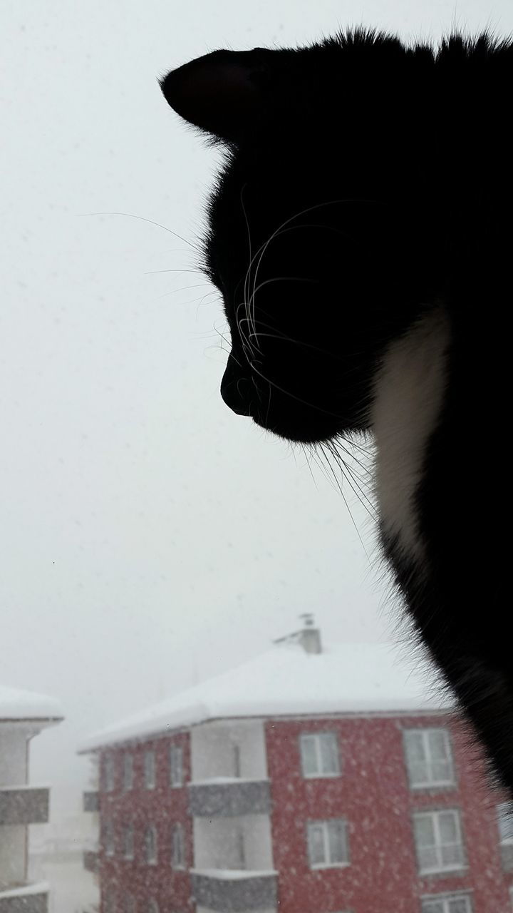 Close-Up Of Black Cat Looking Through Window Against Sky During Snowfall