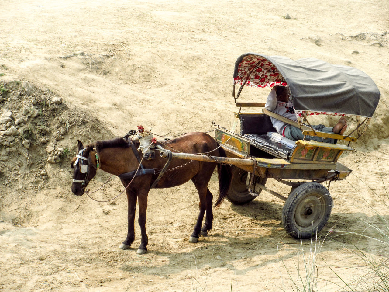 High Angle View Of Man Relaxing In Horse Cart