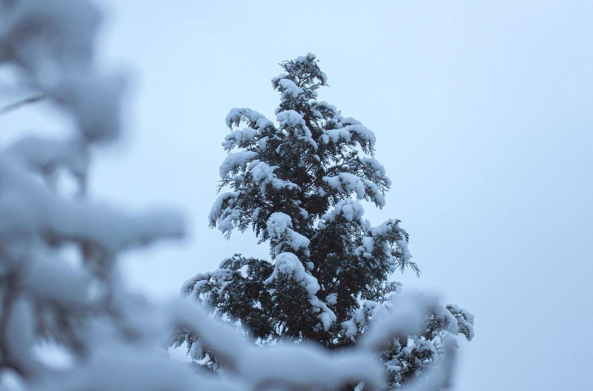 Bäume Schnee Snow Snowing This Morning Trees White Album Winter Wintertime Winterwonderland