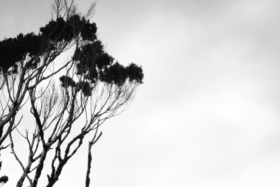 Tree Branch - RAW available Bare Tree Beauty In Nature Blackandwhite Branch Cloud - Sky Day Eye4photography  EyeEm Nature Lover Low Angle View Nature No People Outdoors Shillouette Sky The Purist (no Edit, No Filter) Tree