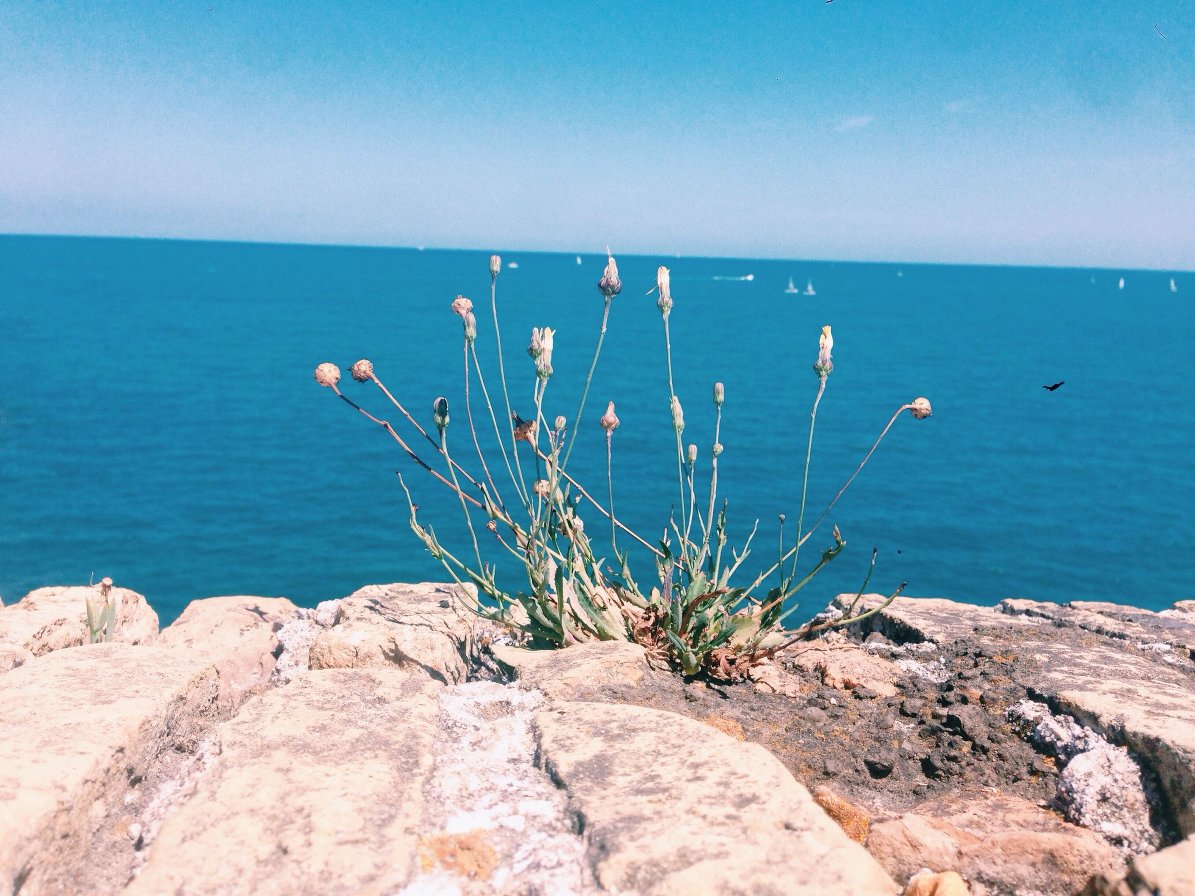 sea, water, horizon over water, blue, beauty in nature, tranquility, nature, plant, tranquil scene, scenics, rock - object, growth, flower, clear sky, rock, day, idyllic, outdoors, sky, rock formation