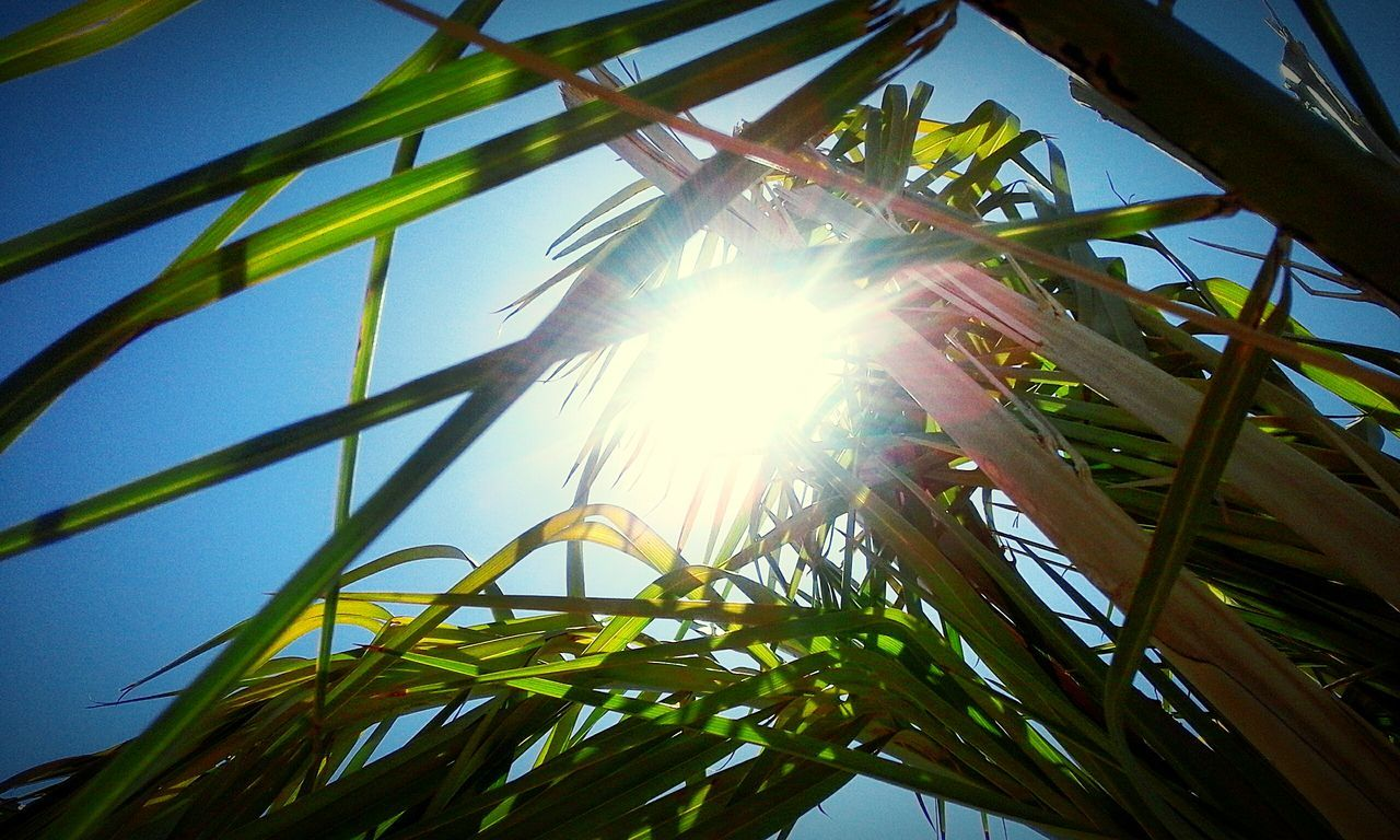 low angle view, sunbeam, sun, sunlight, lens flare, growth, nature, day, beauty in nature, no people, leaf, sky, outdoors, tree, plant, tranquility, blue, clear sky, close-up