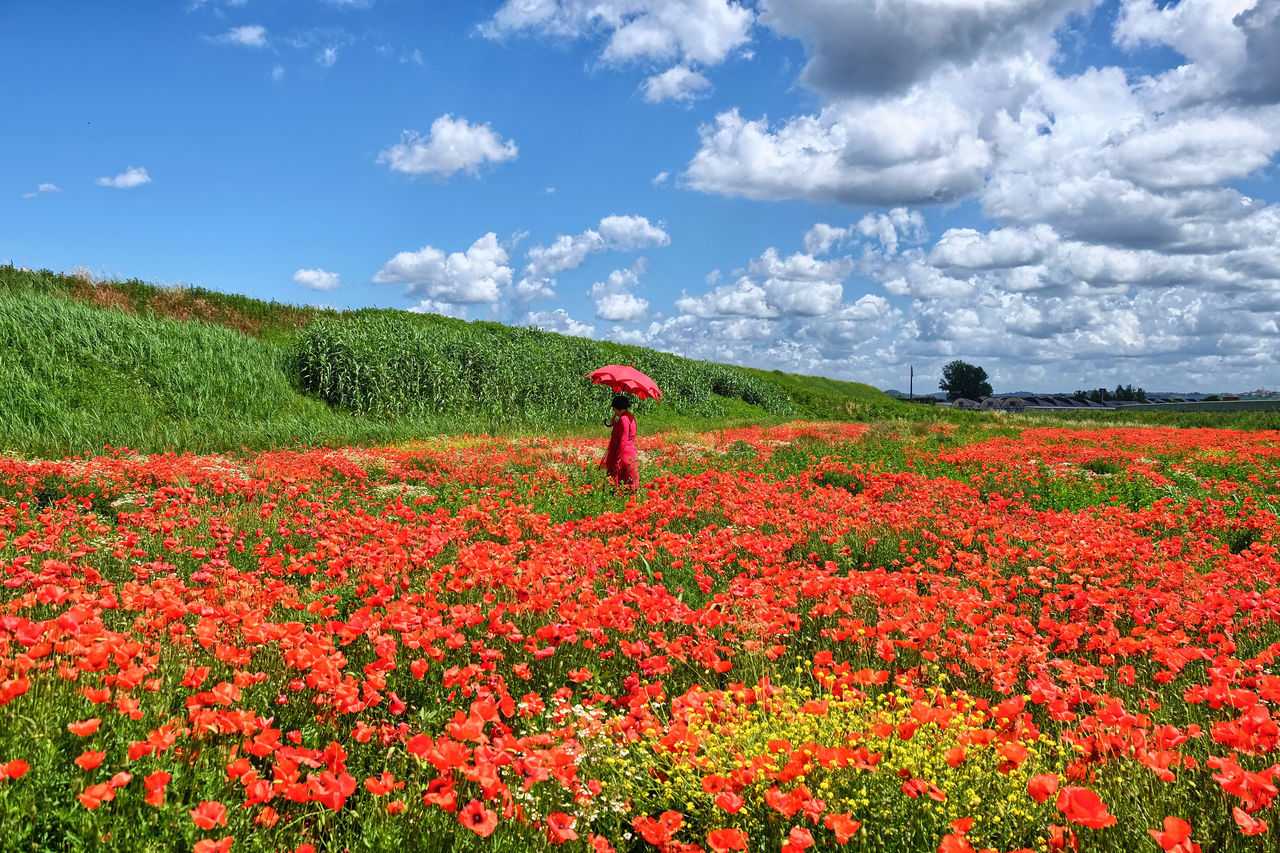 Lolly and red Red One Person Cloud - Sky Nature Sky Flower Poppy Outdoors Rural Scene Tuscany Umbrella Red Umbrella Gildo Masini Hard Beauty LollyLove Light Nature Lovely Fuji X-T1 Soleil☀️ Live Eyem Vision Day Adults Only