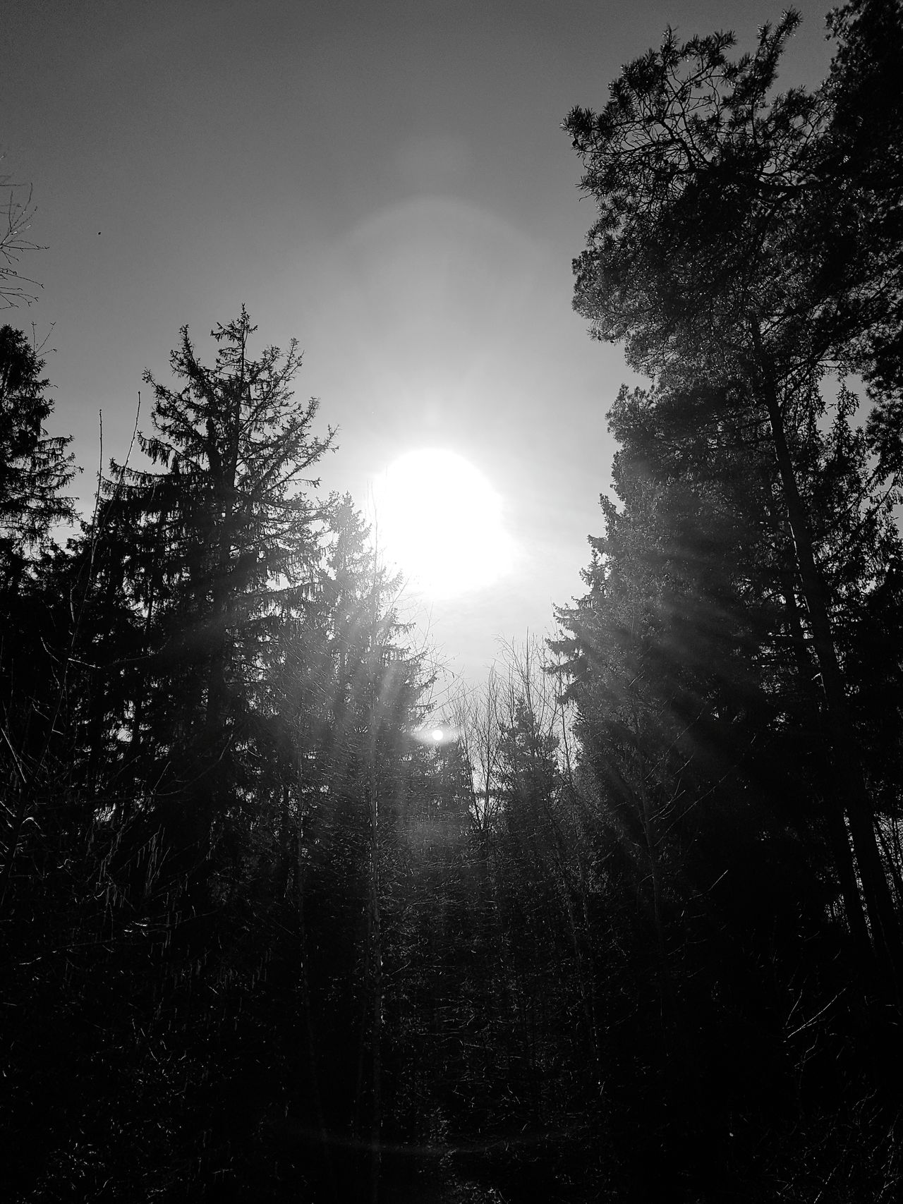 Tree Nature Sky Sunlight Beauty In Nature No People Sunset Outdoors Day Blackandwhite Black And White Black & White Black And White Photography Black And White Sun