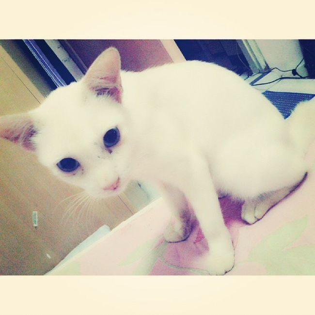 Si puteh! =^.^= love him sooo much! ^_^ Cat SiPuteh Meow