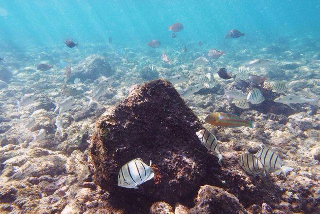 Underwater Underwaterphotography Fish Snorkeling Hawaii