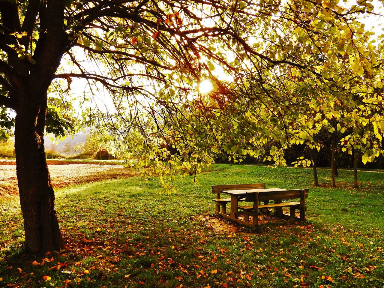 tree, nature, tranquility, beauty in nature, tranquil scene, autumn, park - man made space, growth, branch, scenics, leaf, no people, outdoors, landscape, tree trunk, day, grass