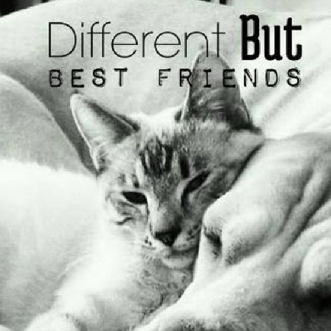 Likecatsanddogs Friendship