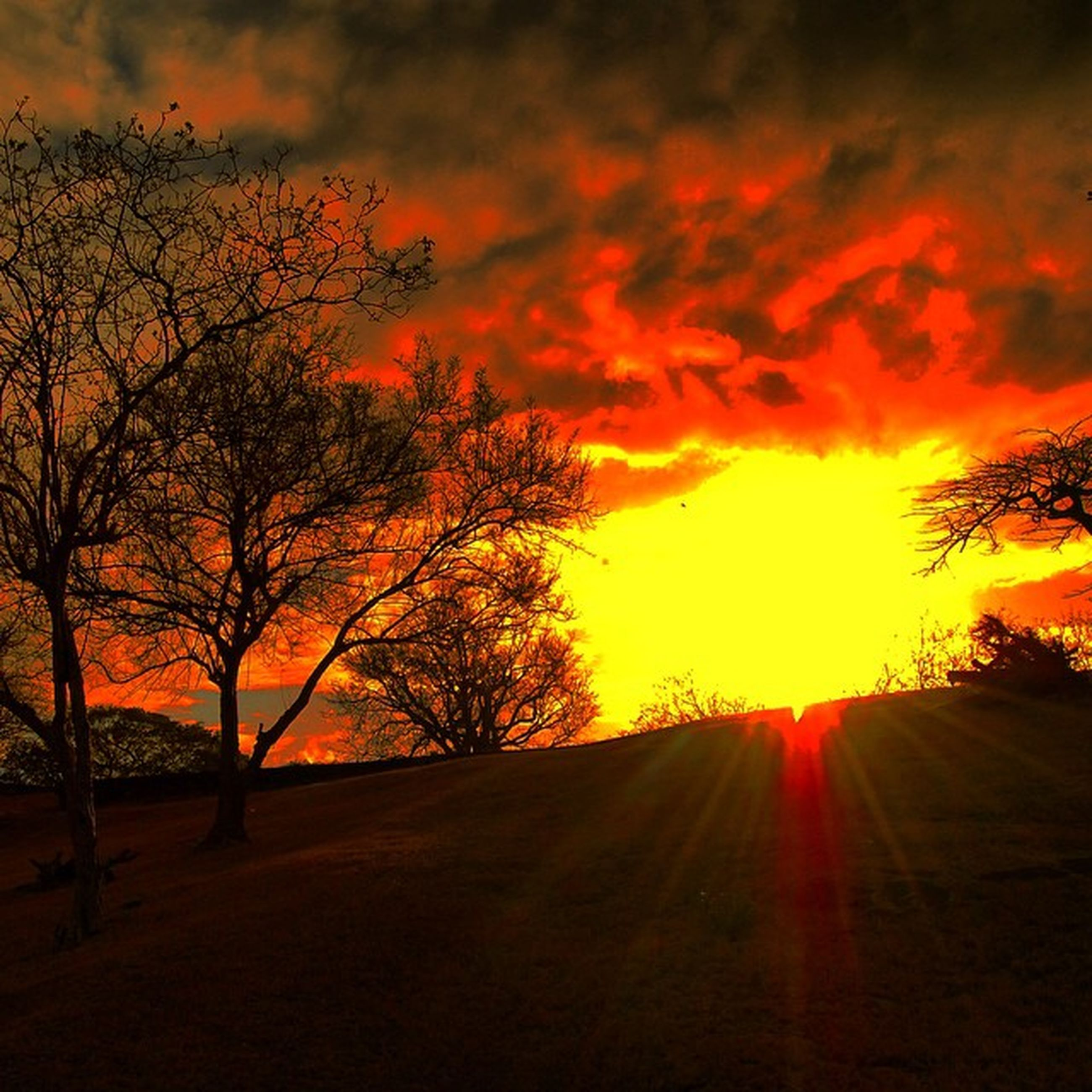 sunset, orange color, sun, sky, beauty in nature, scenics, silhouette, tranquility, tree, tranquil scene, nature, idyllic, cloud - sky, sunlight, dramatic sky, sunbeam, landscape, back lit, outdoors, no people