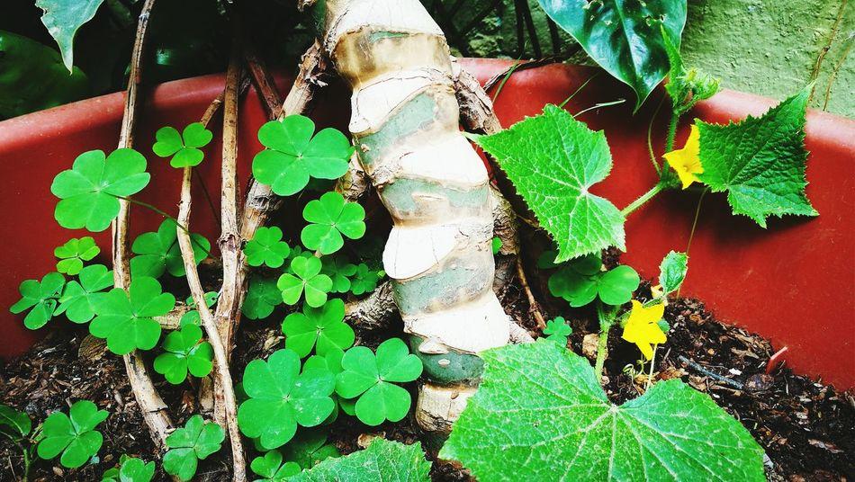 Mi jardin, vida de mi vida