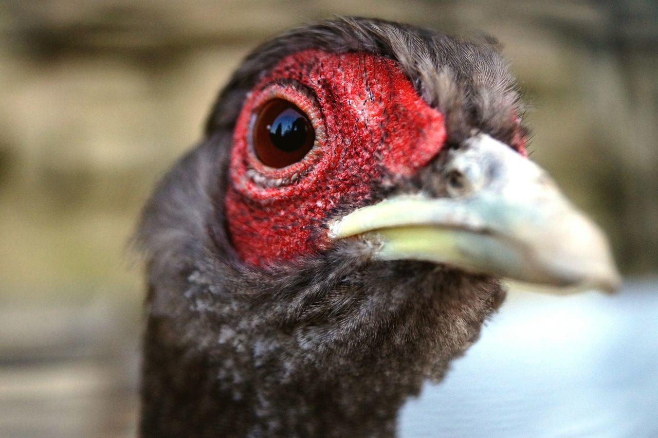 Bird One Animal Animal Themes Close-up No People Outdoors Day Weingarten Vogel Vogelpark Sony Alpha Px58 Draußen Nature