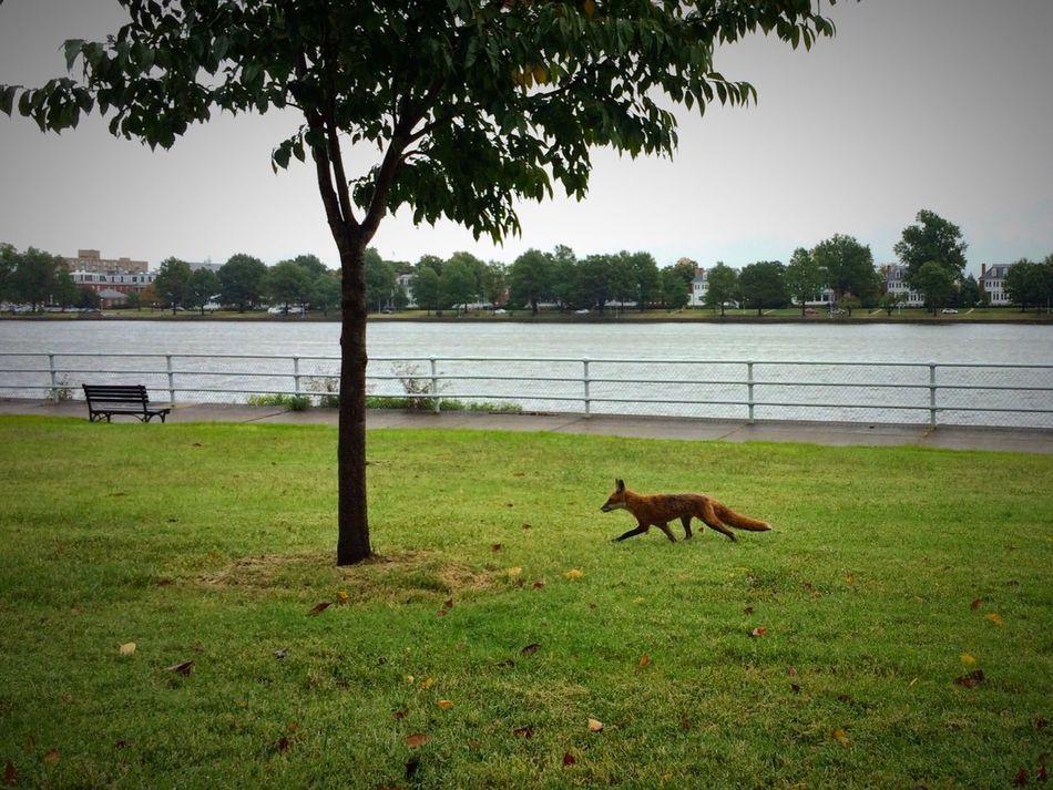 Feeling a little foxy… Fox