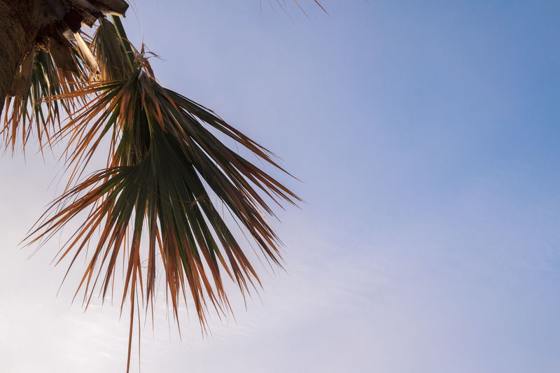 Blue Sky Light Clouds Looking Up Looking Up At The Sky No People Palm Palm Tree Rule Of Thirds Single Palm Tree Single Tree