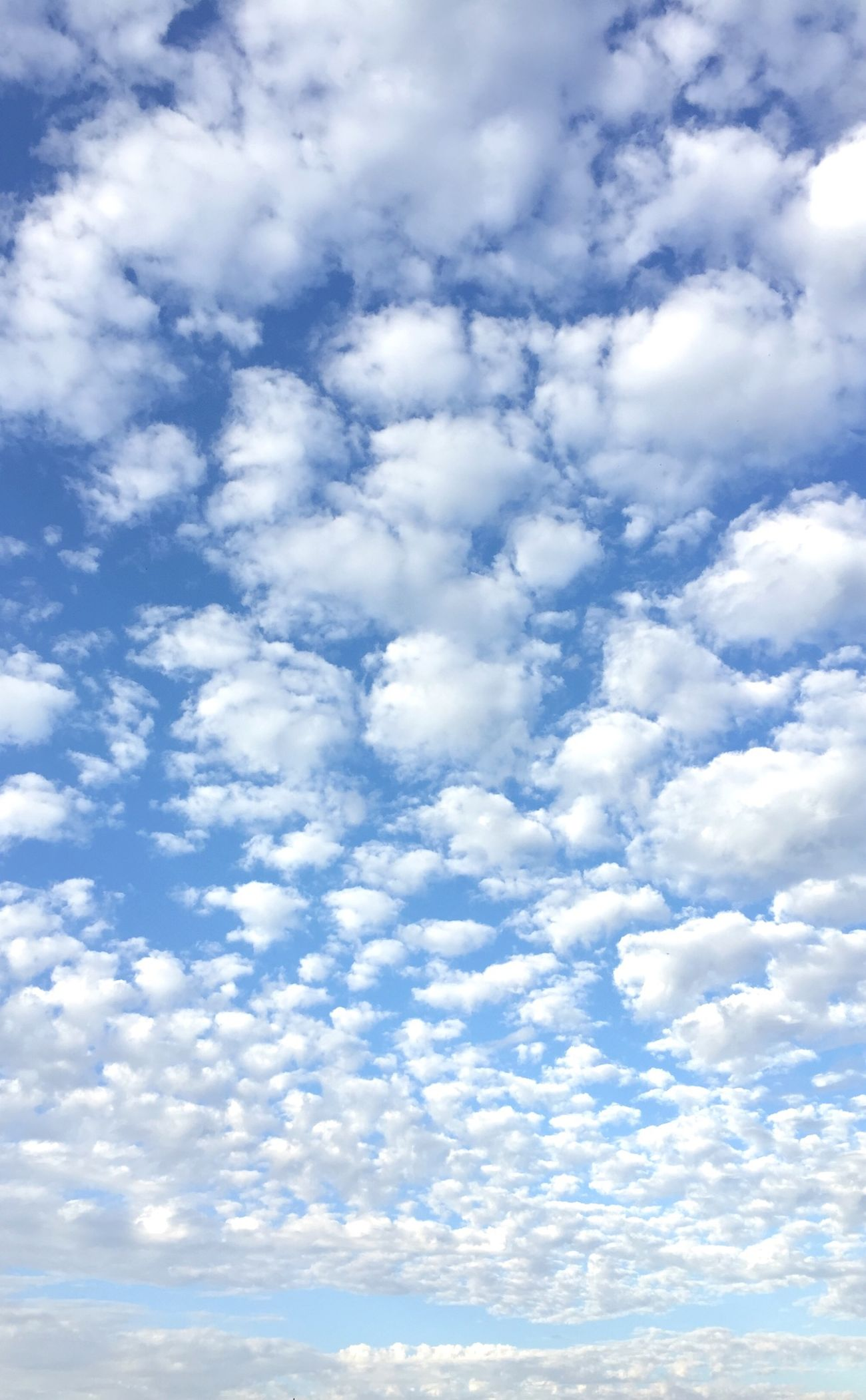 Sky Nature Sky_collection Japan Autumn Blue White Sheep Abstract Outdoors
